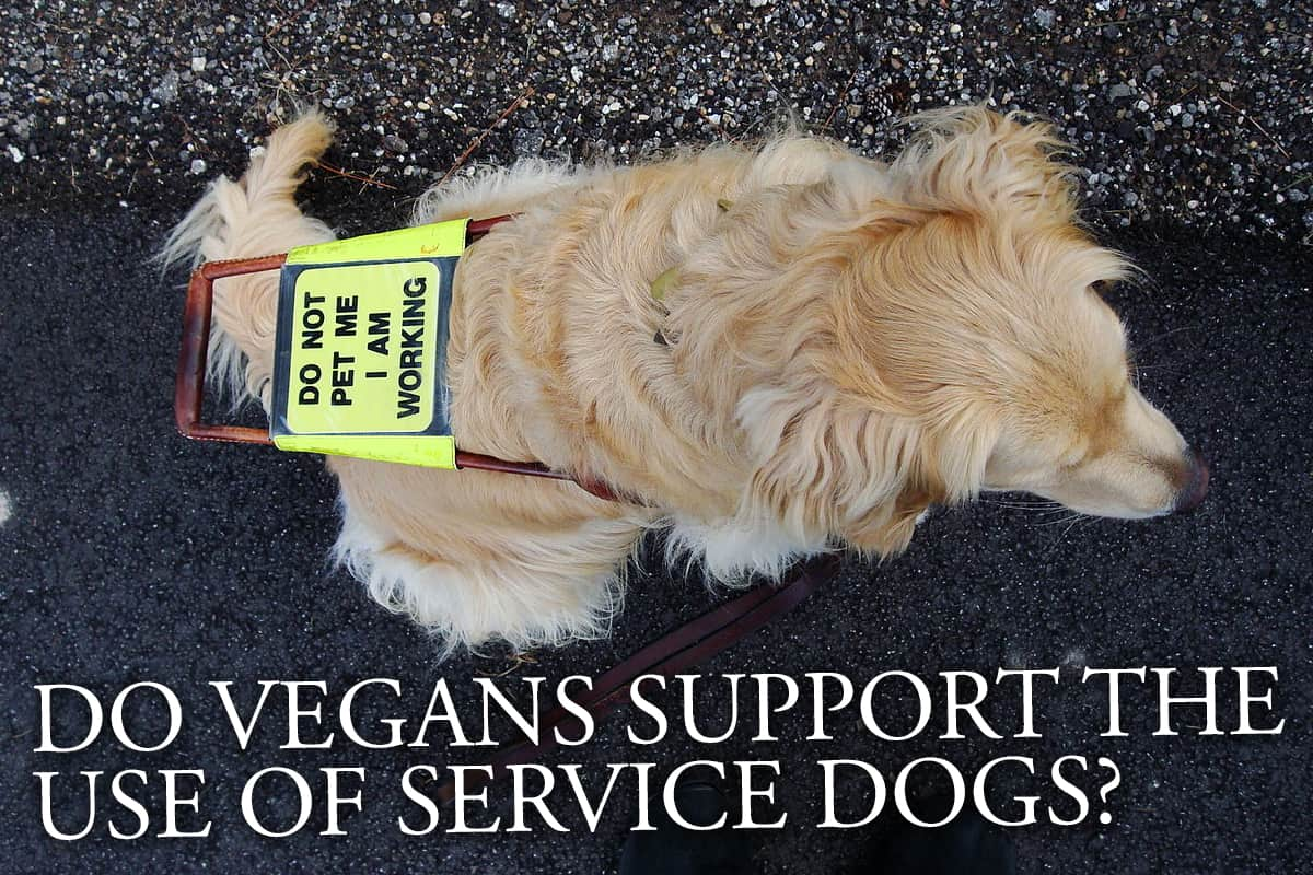 Do Vegans Support The Use Of Service Dogs?
